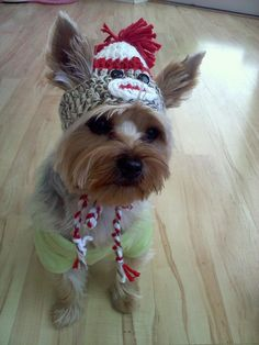 Sock Monkey Doggie Toboggan. Yep, this is what all the pups in our family are getting for X-mas!