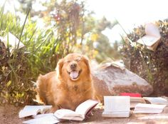 Doing research #dogs