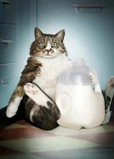 """""""OK, so maybe I do have a problem...""""  A feline version of me.  :-)))"""