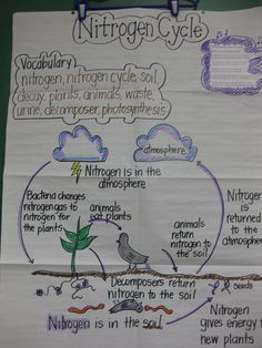 Nitrogen Cycle Worksheet For Middle School