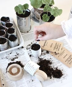 Newspaper seed cups.