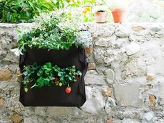 Wall planters made from recycled plastic bottles
