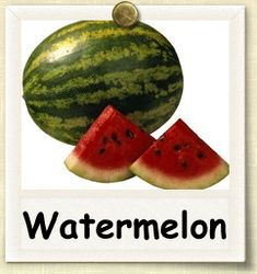 How to Grow Watermelon | Guide to Growing Watermelon