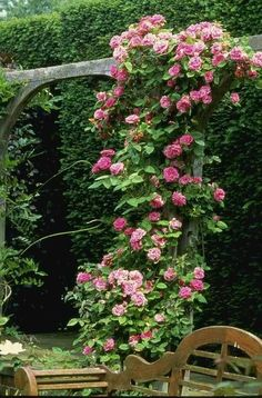 Climbing Roses are very fragrant...../ I like this support structure for the climber