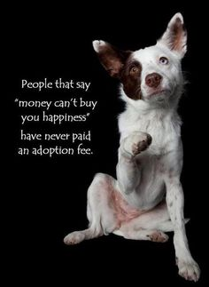 Adoption Fee anim, pet, adopt, true, happiness, puppi, dog, quot, friend