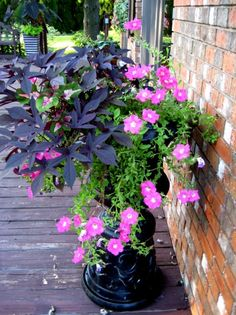 Urn filled with sweet potato vine and wave petunias