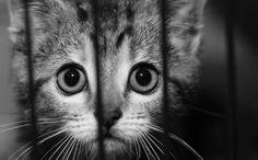 cats, babi anim, anim abus, nurs mother, born to die, anim shelter, anim heart, baby animals, lab