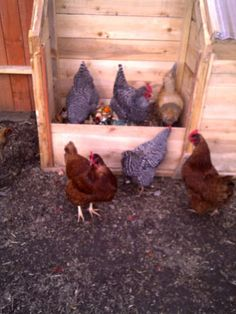 How to put together a 3-bin composting system powered by chickens. Great instructions for building a composter, even if you don't include chickens.