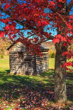 Tiny shed