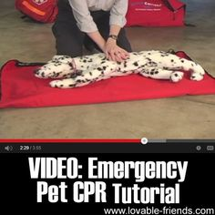 We found a great video tutorial about Pet CPR, that will help you in case of emergency.