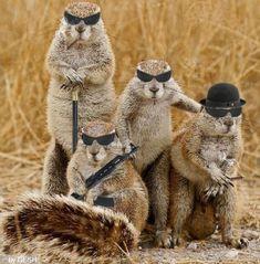 Squirrel Mafia.