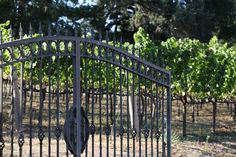 Welcome to Fog Crest Vineyard. Come on in!