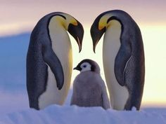 Penguin Family :)