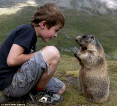 Marmot Whisperer: Eight year old Matteo Walch with his friend in the Austrian Alps by Rachel McDermott, dailymail.co.uk  #Marmot #Matteo_Walch #dailymail anim, news, pet, marmot, friendship, austrian alp, families, people, relationships