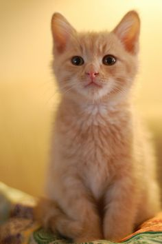 Oh I just love orange cats!