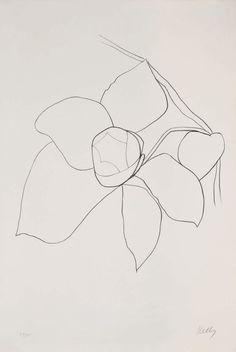 sketch, rose, artist
