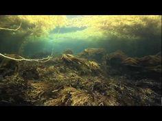 Amazing kelp video, so beautiful!