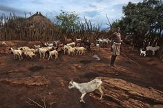 Inspiration:   Mitchell Kanashkevich     Aike, the oldest male child in his family is responsible for taking care of the family's goats.
