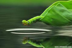 singing caterpillar by Uda Dennie