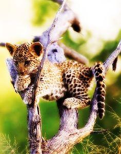 Leopard Cub <3<3