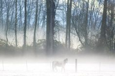 """Foggy Morning on Sauvie Island By Beth Nakamura """"Photos from The Oregonian"""""""