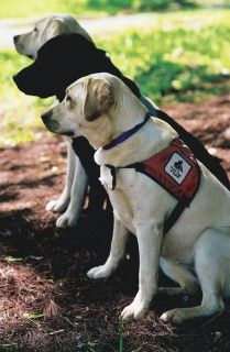 Service Dogs of Virginia | VA