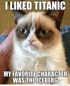 Grumpy Cat actually likes something