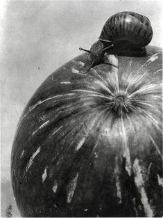 Manuel ALVAREZ BRAVO :: Calabaza y Caracol / Snail and Pumpkin, 1928