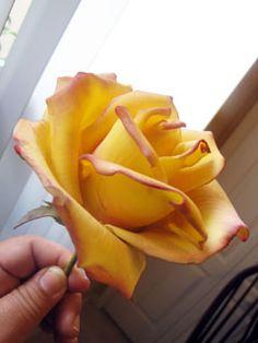Gumpaste Flower Classes