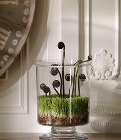 plant, glass, flower