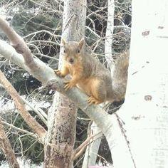 Peanut playing outside