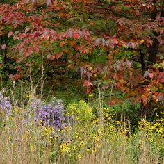 Enter to win a signed library of books by Rick Darke and Doug Tallamy. #contest #livinglandscape