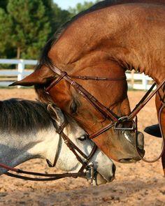 Pony love is adorable