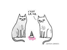cats get it...