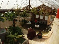 The McClungs' aquaponic greenhouse would allow them to be self-sufficient if civilization collapses.