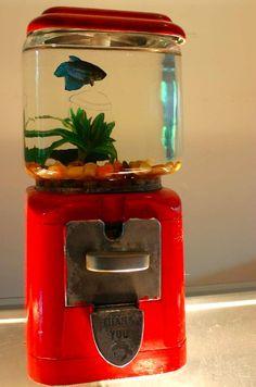 DIY Upcycled Fish Tank