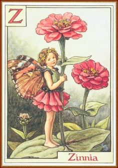cice mari, mari barker, zinnias, zinnia fairi, flowerfairi, art, flowers, flower fairies, cicely mary barker