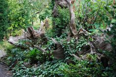 Garden stumpery, a great place for shade lovers
