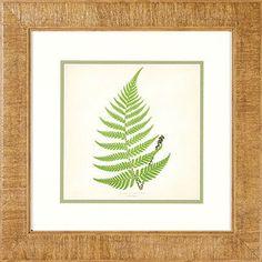 Better Homes and Gardens Ferns I Framed Art