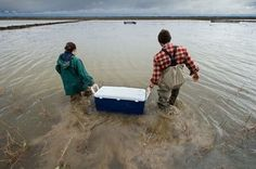 Flooded rice field is tested as salmon nursery in Yolo Bypass - Sacramento Bee - select photo to view article.
