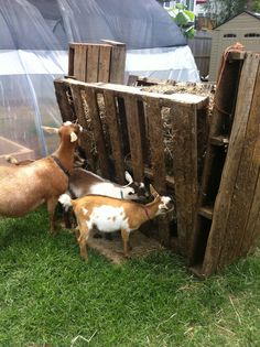 image result for pallet hay feeder | hemmet | pinterest