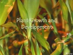 This PowerPoint contains 34 slides on the following topics: Plant Growth and Development, How Plants Grow & Develop, Germination, Plant Life Spans, Perennials, Annuals, Biennials, Meristems, Differentiation, Primary Growth, Apical meristems, primary tissues, Secondary Growth, cork cambium, vascular cambium, secondary tissues, Woody Stem Plant Development, tissue culture, Nutrients, Major Mineral Nutrients Required by Plants, Hormonal Control of Growth, Frits Went, Auxin, apical dominance. $