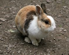 Forum on this topic: Is Your Pet Too Pudgy, is-your-pet-too-pudgy/