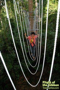 Flight of Gibbon & Rock Climbing - 2 Days