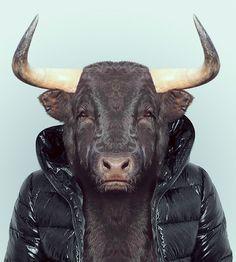 Animal Portrait