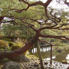Iga Ryu Ninja Museum, Mie Prefecture, Japan Yes Ninja Museum | Places ...