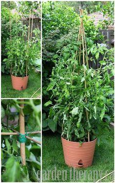 DIY Bamboo Tomato Cage via www.gardentherapy.ca