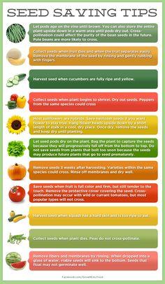 Seed Saving Tips - Grow REAL Food - Organic, Non-GMO Food in Your Backyard