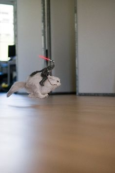 Vader on a Cat
