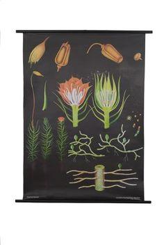 Moss Botanical Poster